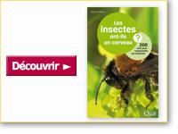 Livre Les insectes ont-ils un cerveau ?